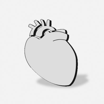Thorax, Cardiovascular Surgery